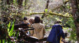 Studiu global: oamenii petrec în medie pe zi doar o oră în natură