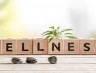 wellness-9872435fb7